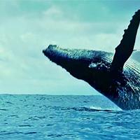 Oceans - dokumentumfilm