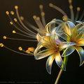 Fura japán virágok és pillangók