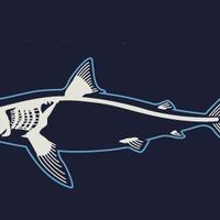 Infografika a cápákról (Klikk a képre!)