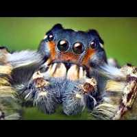 Így kell rovarokat fotózni