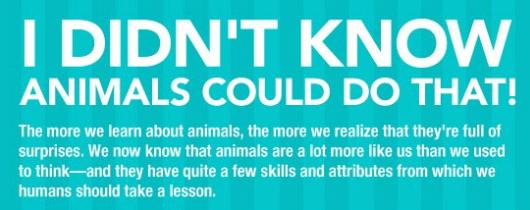 animals skills.jpg