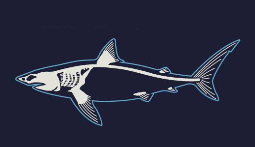 sharks_infographic.png