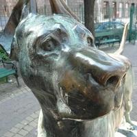 A figyelő kutya