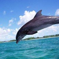 A Zöld Delfin