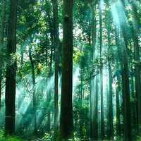 Az erdő két arca
