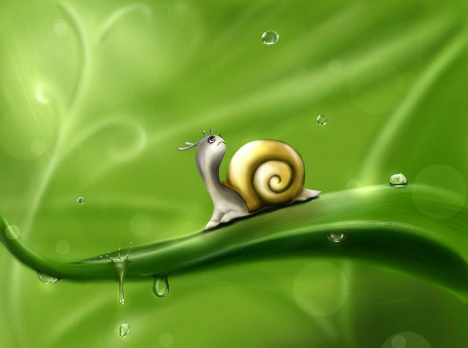 snail-83672_1280.jpg