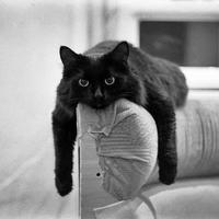 Nehéz a macskák élete...- nem is gondolnátok mennyire!
