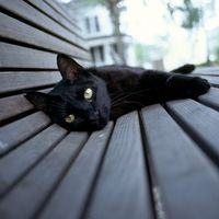 Nyári macskatörténelem :)