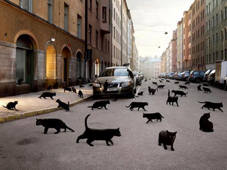 macskak.jpg