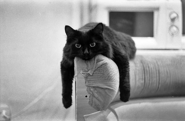 nehéz macskának lenni.jpg