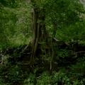A khunti erdő titkai - negyedik kaland (második rész)