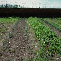 A care farmok kialakulásának rövid története