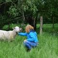 A green care hátterében: a természet gyógyító ereje