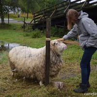 Care farmok Hollandiában