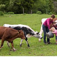 Mi is az a care farming? Szerintünk...