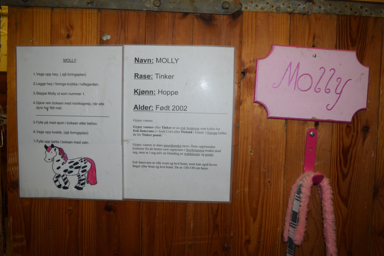 Minden állatról találtunk leírást, ami a gyerekek munkáját segíti. Ez itt Mollynak, az egyik lónak a profilja.