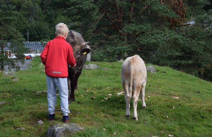 Közösen megetettük a bocikat. A gyerekek közül volt, aki nem akarta békén hagyni a teheneket, volt, aki kicsit megijedt a közvetlenségüktől.