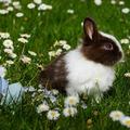 Húsvét szeretetben – ahogyan én látom