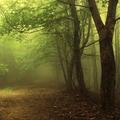 Nő az erdőben - Kocsis Noémi írása