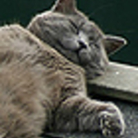 ICA-mesék: Lazi és a Repülő Macskák