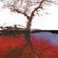 A lehetetlen territóriumai − Gergely Ágnes: Tigrisláz