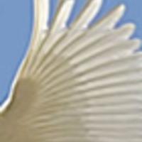 Versvasárnap - Mesterházi Mónika versei