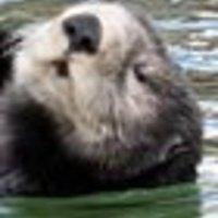 Pancsikol vagy fuldoklik? - fél-igazságok tengerén