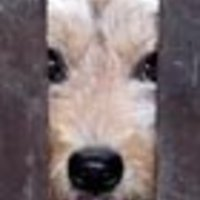 Gordon Agáta: A kutya meg a kerítés