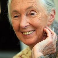Világ tanítónői: Jane Goodall és a csimpánzok