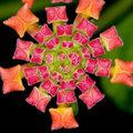 Anya Geometria - az evolúció szerkezete.