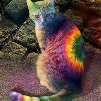 Fényszögek a Pride-on