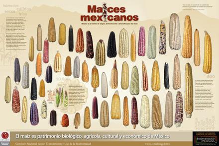 maices-mexicanos.jpg