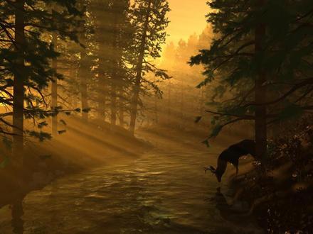 deer-forest-light-beautiful.jpg
