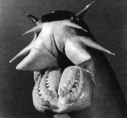 hagfish-grey.jpg
