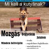 Mi kell a kutyának?