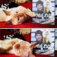 Könyvajánló: cicametál helyett metál macskák!
