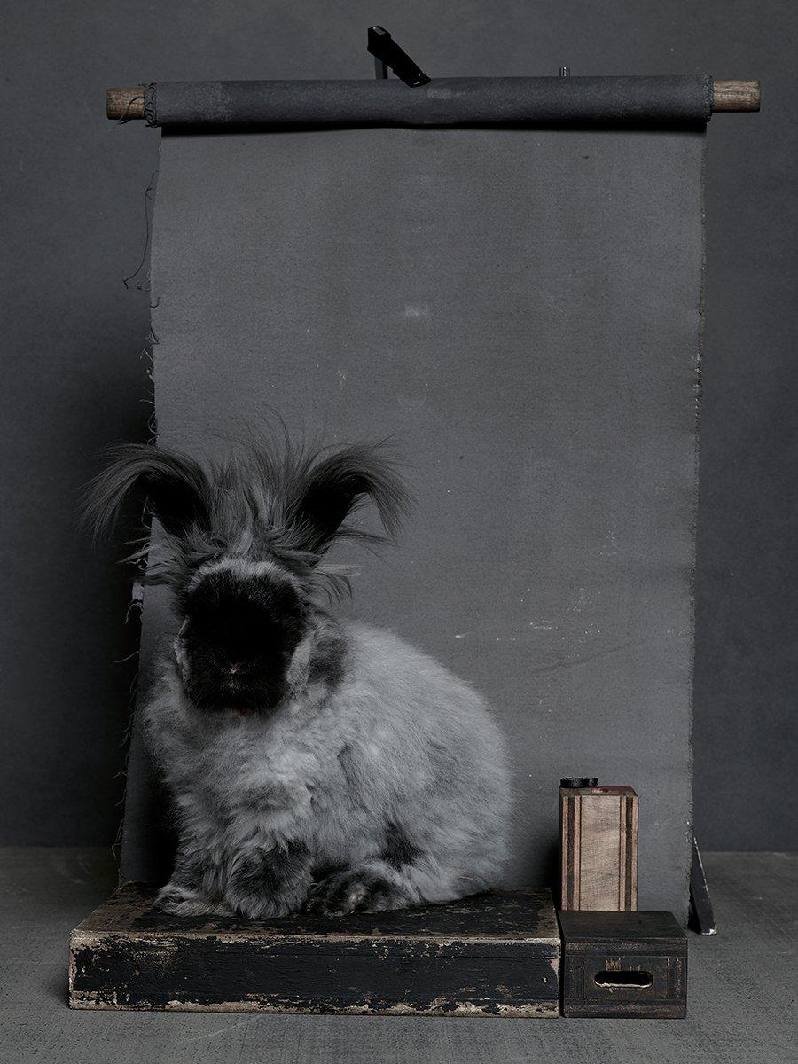 bunny-hop-portraits-01.jpg