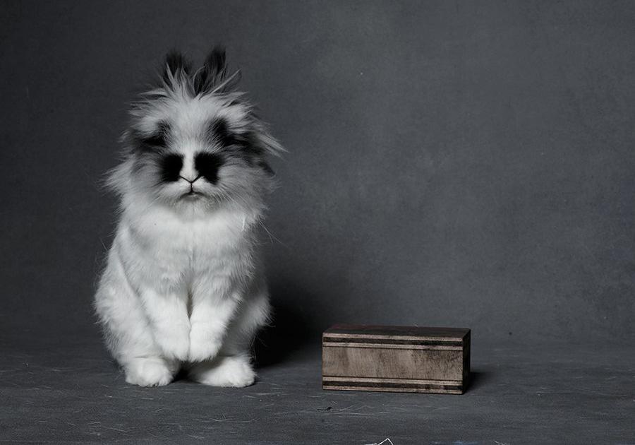 bunny-hop-portraits-02-promo.jpg