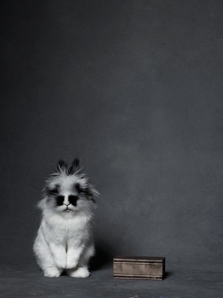 bunny-hop-portraits-02.jpg