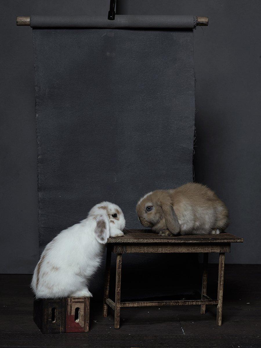 bunny-hop-portraits-03.jpg