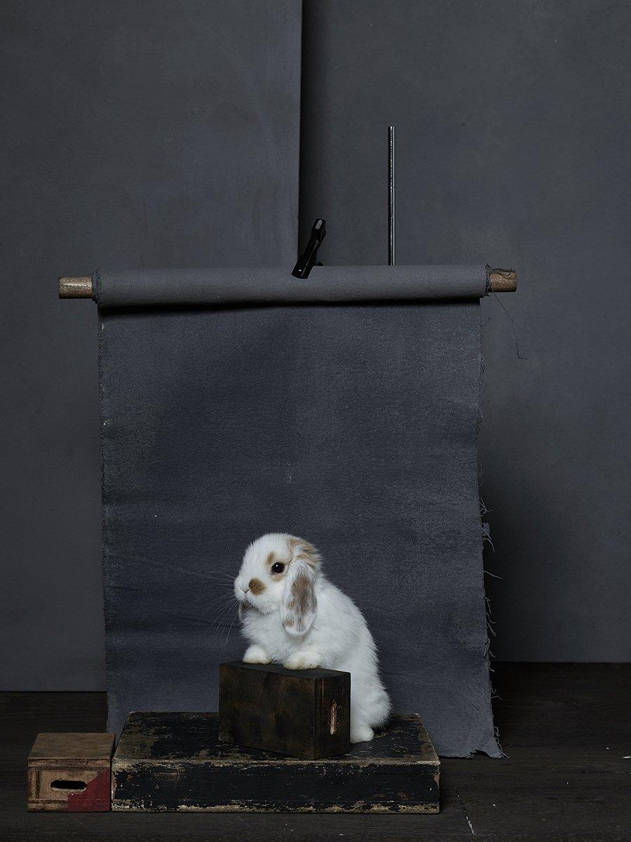 bunny-hop-portraits-04.jpg