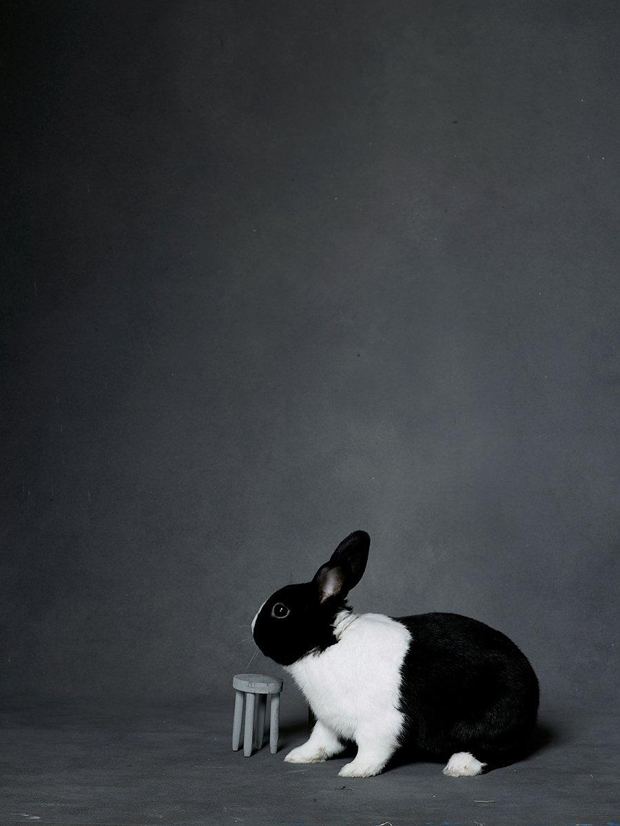 bunny-hop-portraits-05.jpg