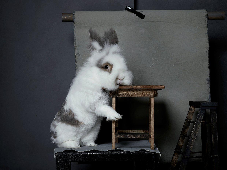 bunny-hop-portraits-07.jpg