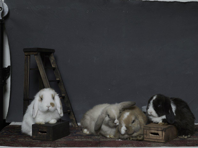bunny-hop-portraits-08.jpg