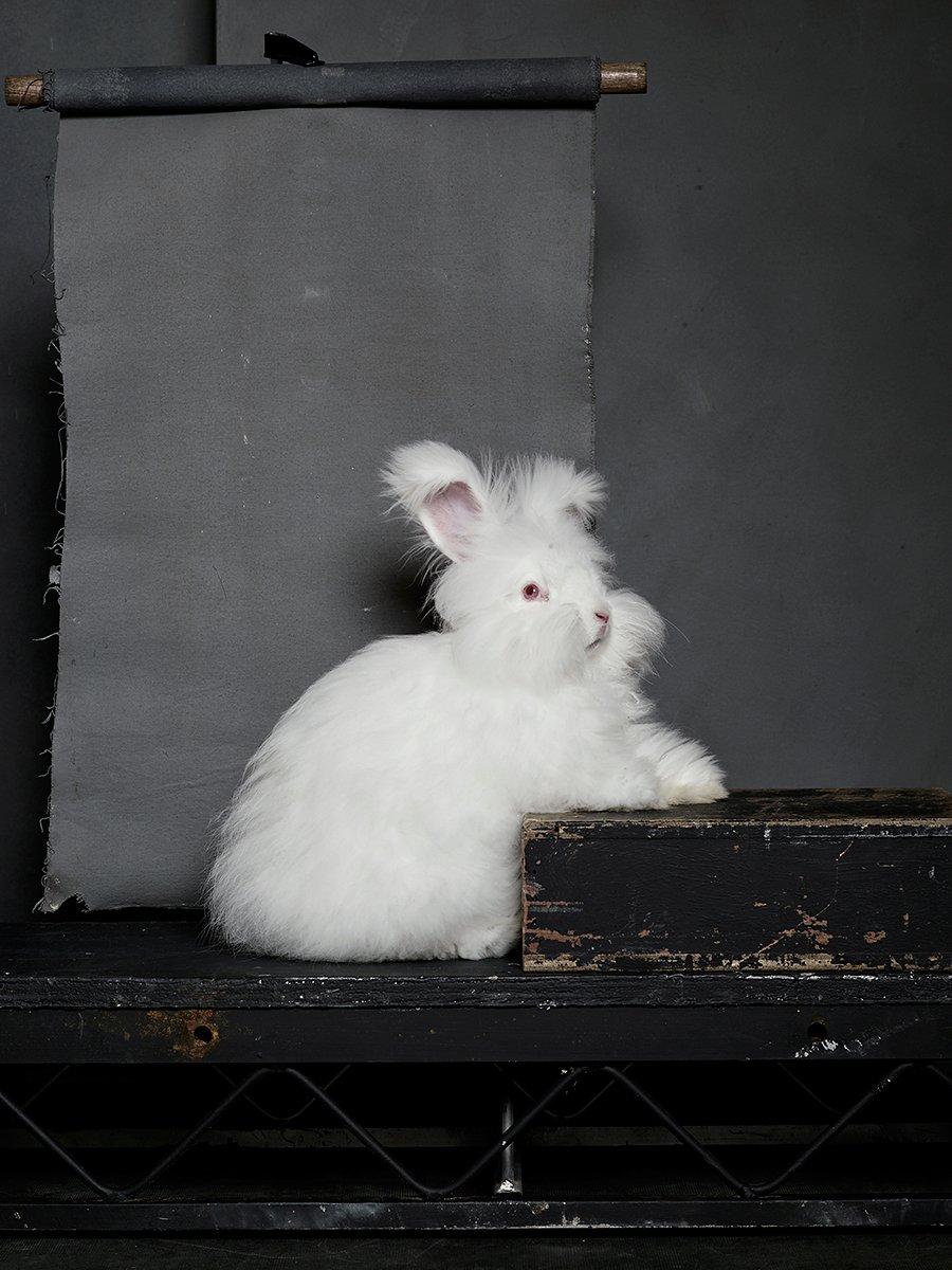 bunny-hop-portraits-09.jpg
