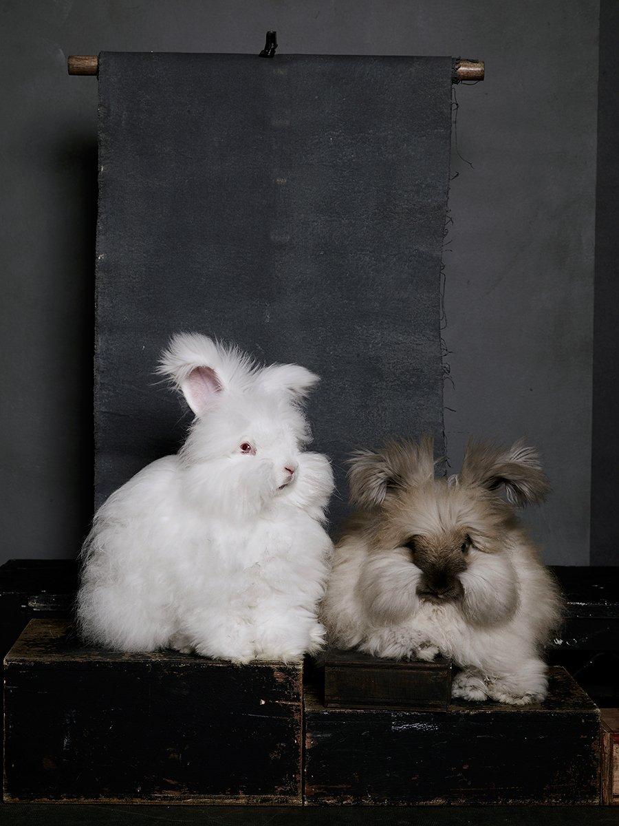 bunny-hop-portraits-10.jpg