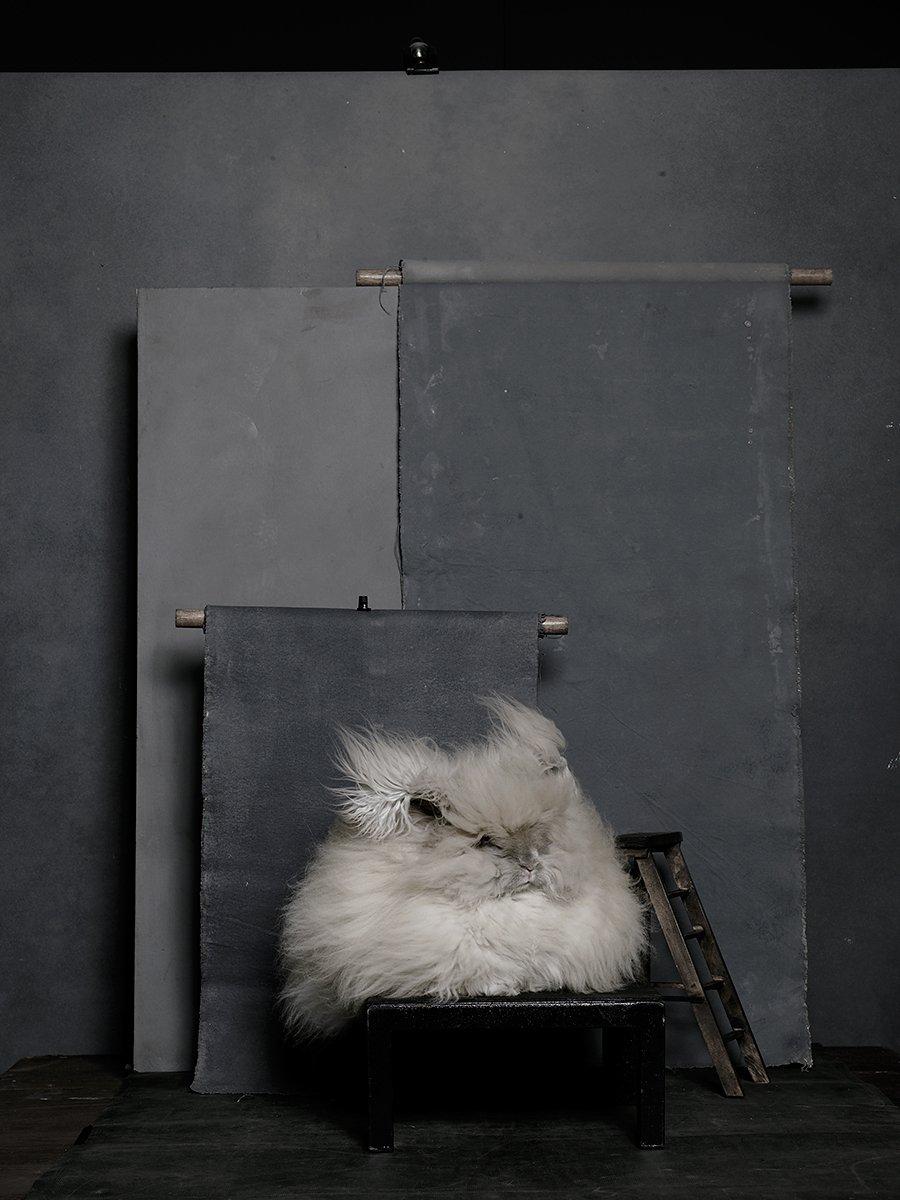 bunny-hop-portraits-12.jpg