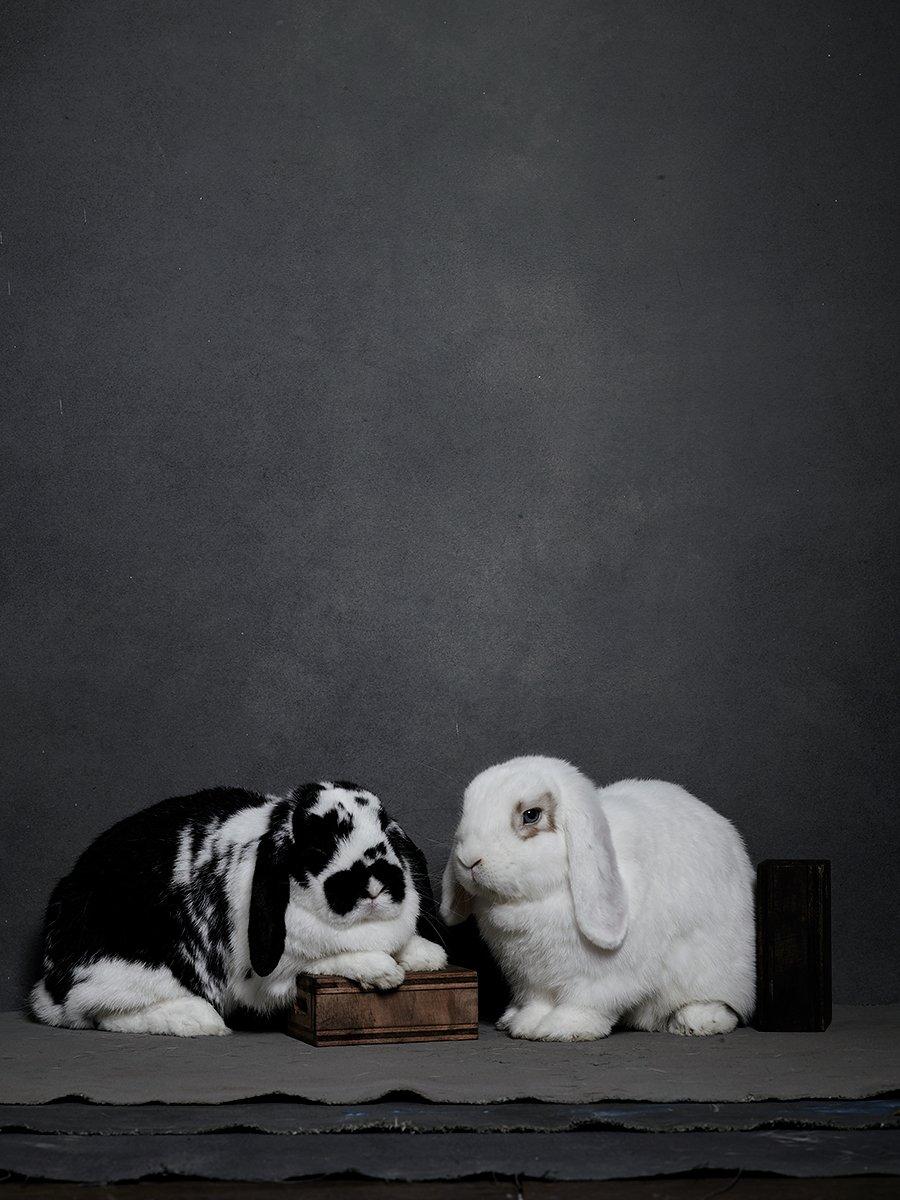 bunny-hop-portraits-13.jpg
