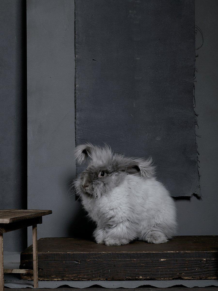 bunny-hop-portraits-14.jpg