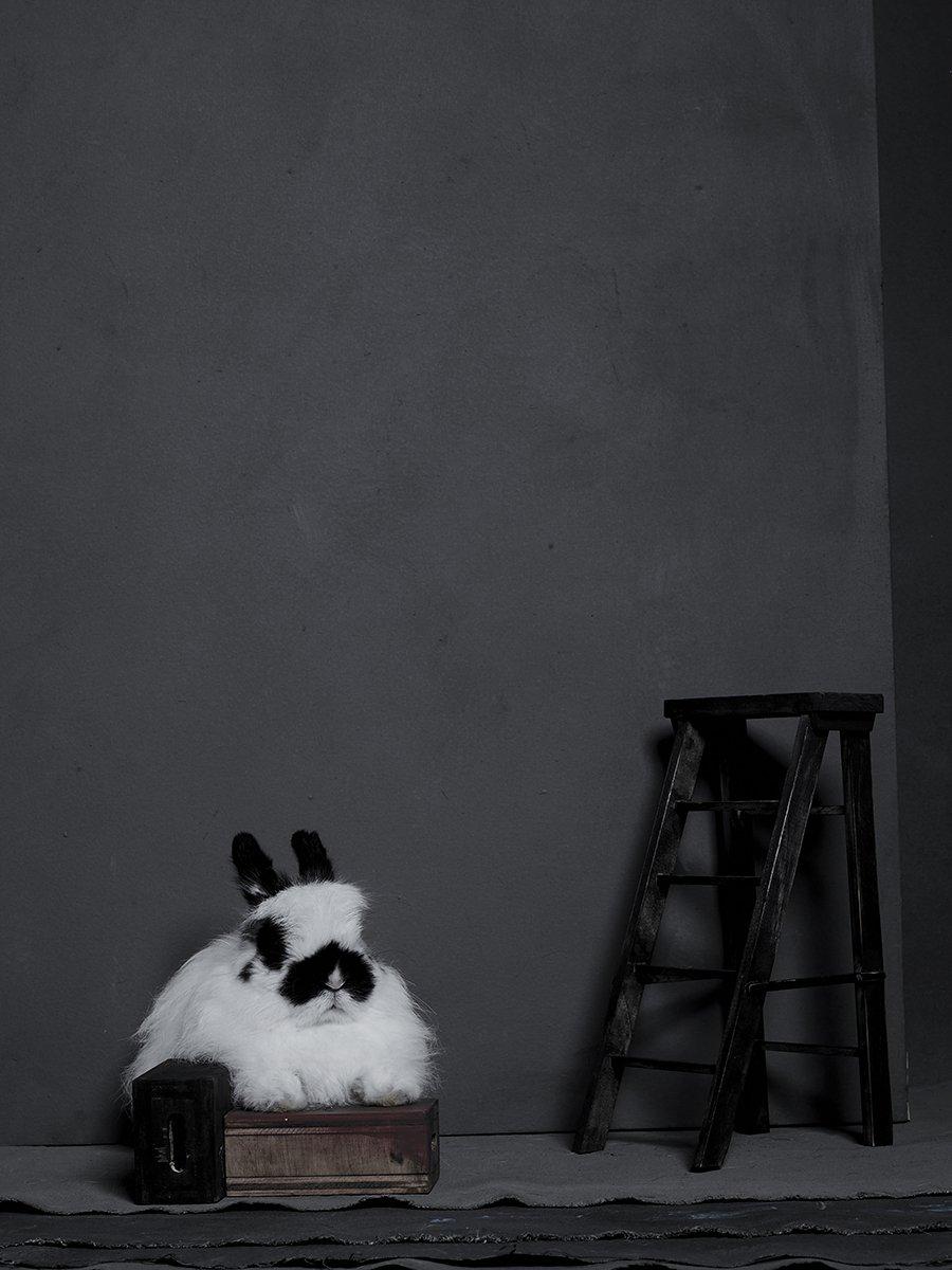 bunny-hop-portraits-151.jpg